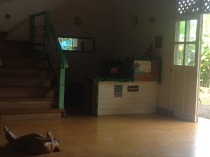 Reception in the main house, and LeeLo the dog with the very tough life.