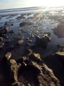 One of the many tidal pools I've explored