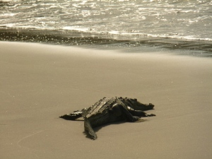 From this angle, I can totally see why Croc's are often mistaken for sea monsters!