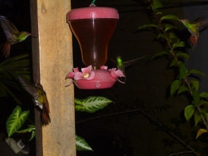 One of my MANY hummingbird photos