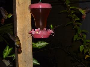 One of my MANY hummingbird photos