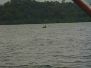 My attempt a a dolphin picture